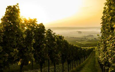 Pourquoi la société en commandite est le meilleur véhicule pour transmettre son domaine vitivinicole?